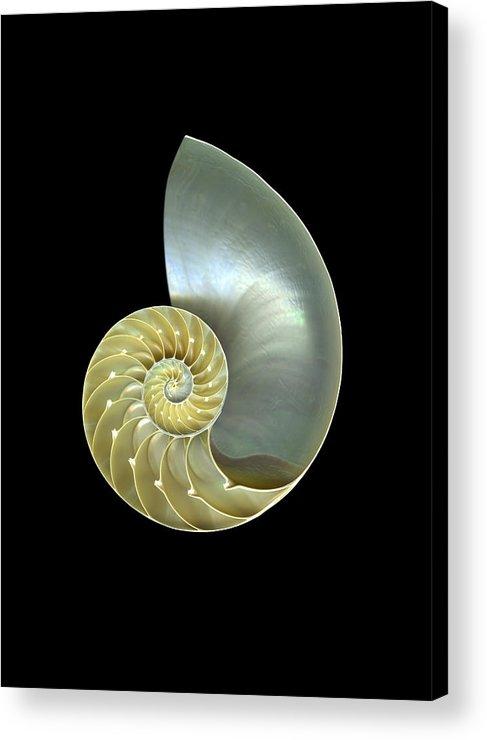 Slanec Acrylic Print featuring the photograph Nautilus Nr.1 by Christian Slanec