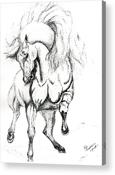 Horses Acrylic Print featuring the drawing Noble Stallion by Kim Souza