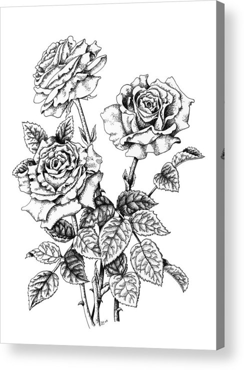 Pen And Ink Acrylic Print featuring the painting Pen And Ink Roses by Lynne Henderson