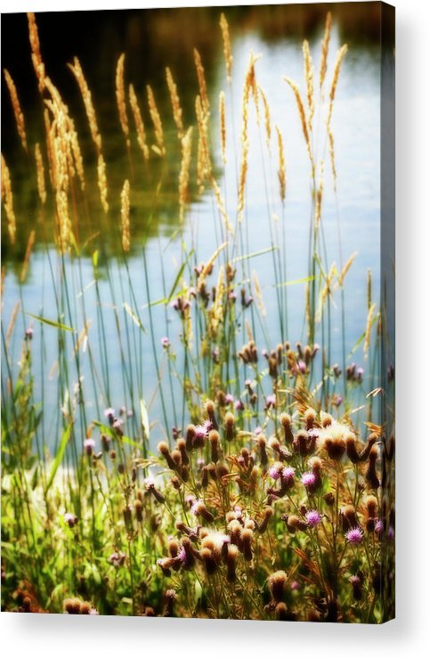 Soft Acrylic Print featuring the photograph Soft And Surreal by Marilyn Hunt