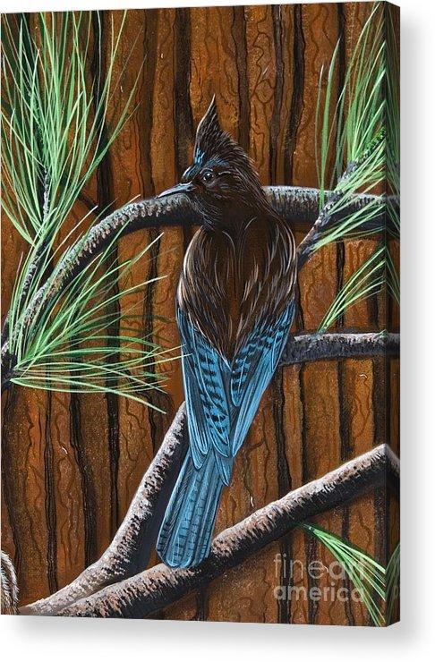 Bird Acrylic Print featuring the painting Stellar Jay by Jennifer Lake