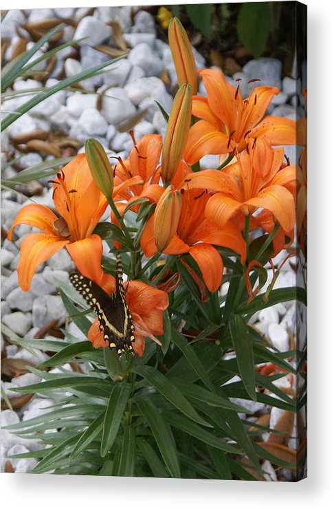Flower Acrylic Print featuring the photograph Untitled by Debbie May