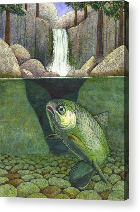 Trout Acrylic Print featuring the painting Water by Catherine G McElroy