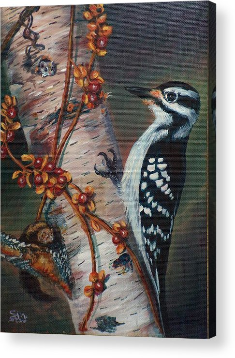 Bird Acrylic Print featuring the painting Wood Pecker by Sylvia Stone