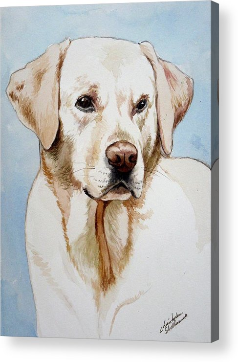 Lab Acrylic Print featuring the painting Yellow Lab by Christopher Shellhammer