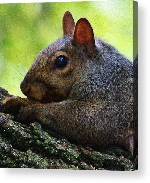 Animal Acrylic Print featuring the photograph What Are You Looking At by Bruce Bley
