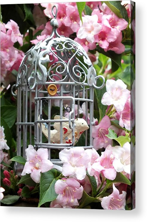 Nature Acrylic Print featuring the photograph Love Bird by Emma Manners