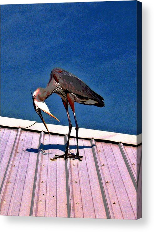Heron Acrylic Print featuring the photograph Bowing Blue Heron by Marian Bell