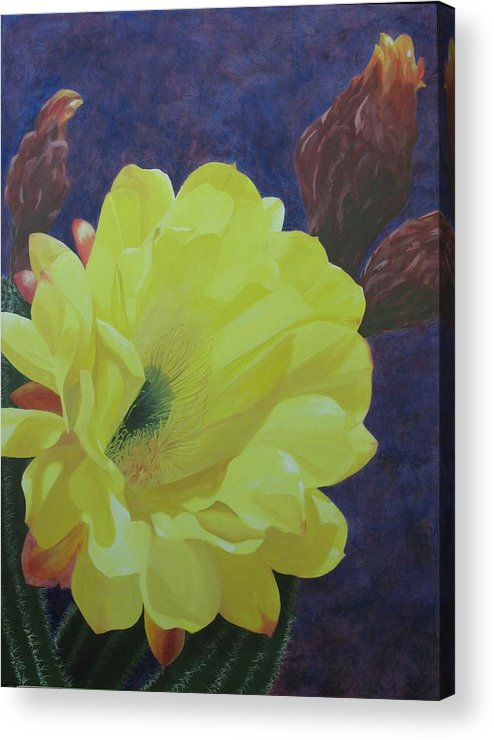 Argentine Cactus Bloom Acrylic Print featuring the painting Cactus Morning by Janis Mock-Jones