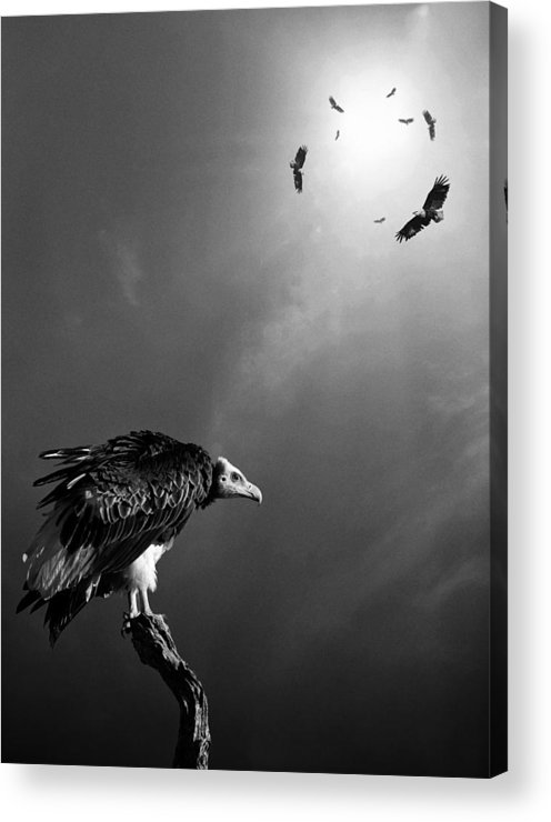Vulture Acrylic Print featuring the photograph Conceptual - Vultures Awaiting by Johan Swanepoel