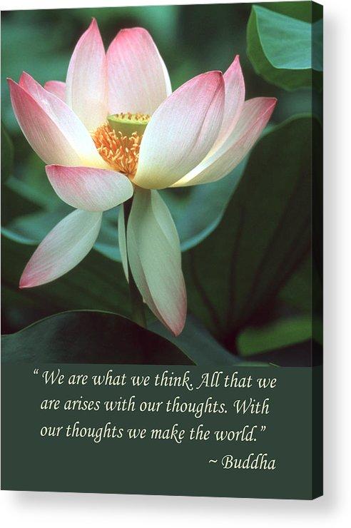 Lotus flower buddha quote acrylic print by chris scroggins lotus flower acrylic print featuring the photograph lotus flower buddha quote by chris scroggins mightylinksfo