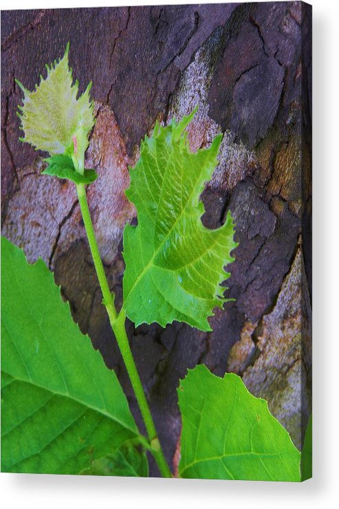 Bark And Heart Acrylic Print featuring the photograph Bark And Heart by Warren Thompson
