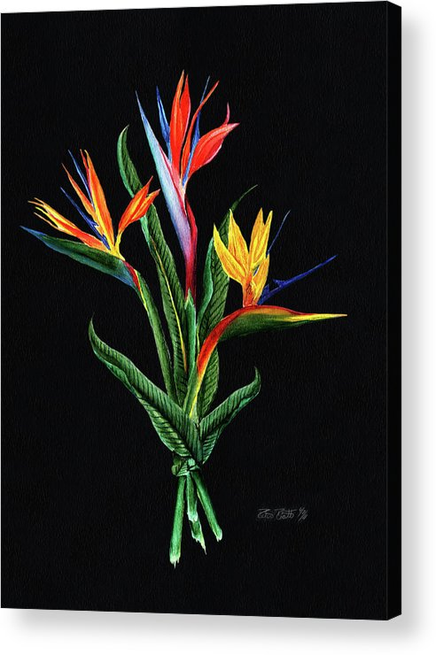Bird Of Paradise Acrylic Print featuring the painting Bird Of Paradise In Black by Peter Piatt