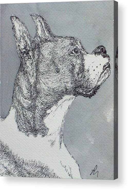 Dog Acrylic Print featuring the drawing Boxer by Pete Maier