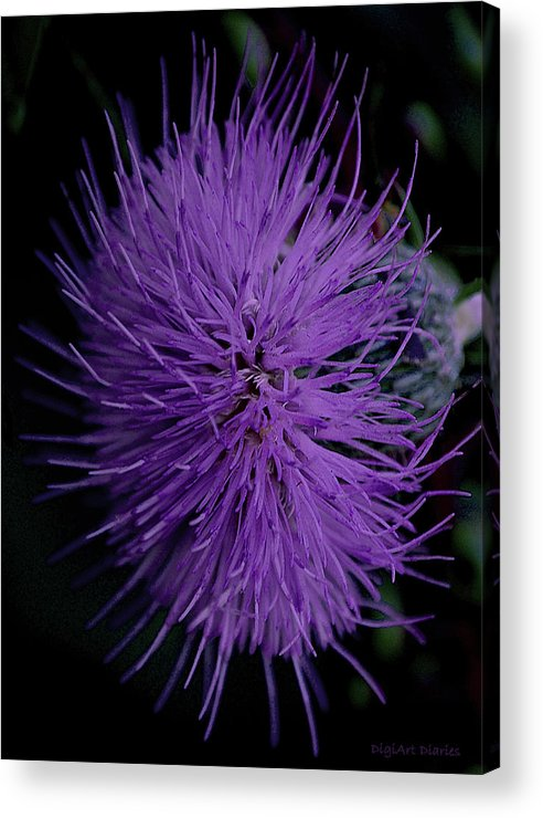 Wildflower Acrylic Print featuring the digital art Burst Of Violet by DigiArt Diaries by Vicky B Fuller