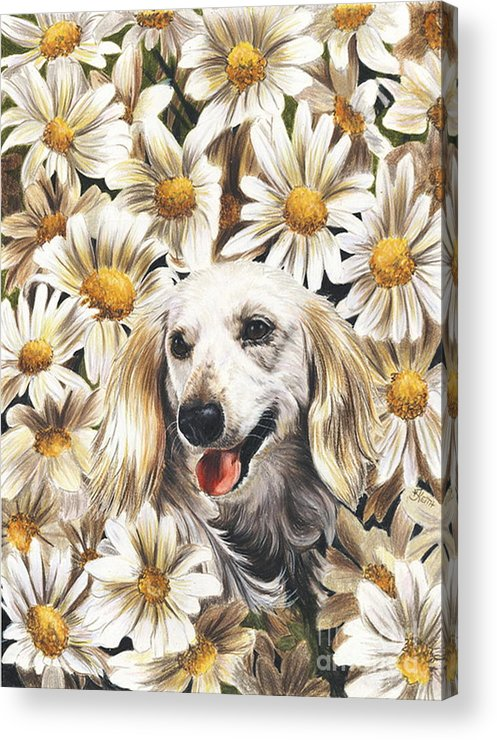Dachshund Acrylic Print featuring the drawing Camoflaged by Barbara Keith