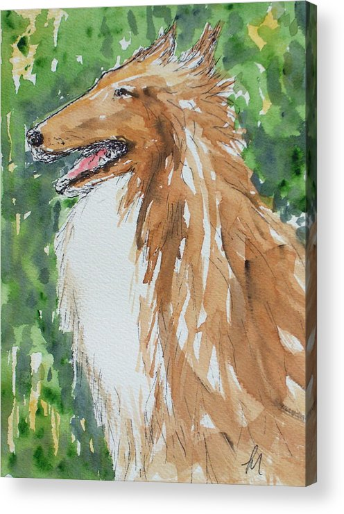 Dog Acrylic Print featuring the painting Collie by Pete Maier