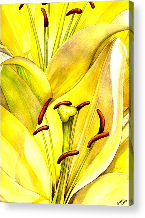Lily Acrylic Print featuring the painting Daylily by Catherine G McElroy