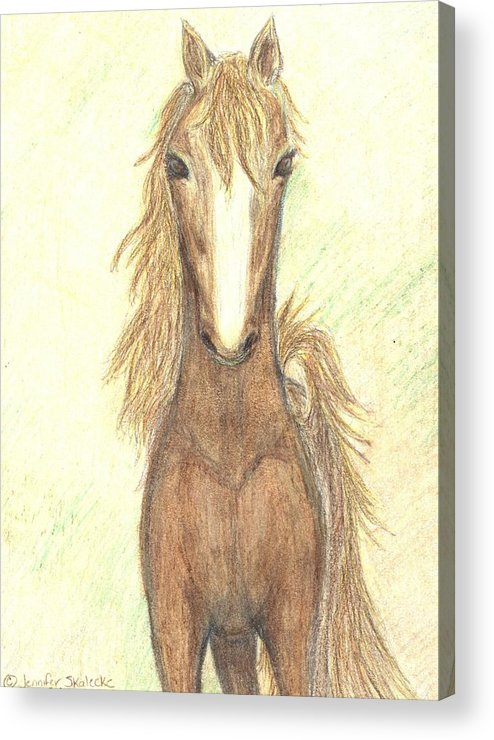 Horse Acrylic Print featuring the drawing Defiant Freedom by Jennifer Skalecke