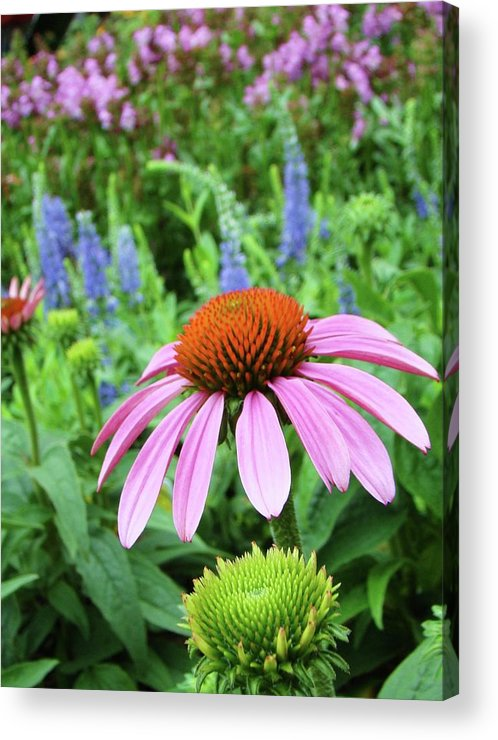 Nature Acrylic Print featuring the photograph Garden Walk by Dave Alexander