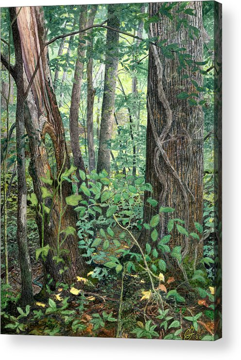 Forest Acrylic Print featuring the painting Generations by Craig Gallaway