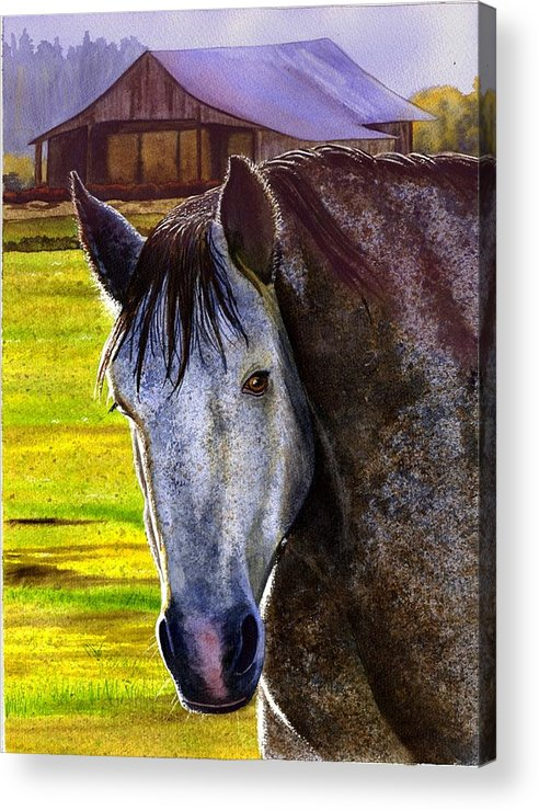 Horse Acrylic Print featuring the painting Gray Horse by Catherine G McElroy