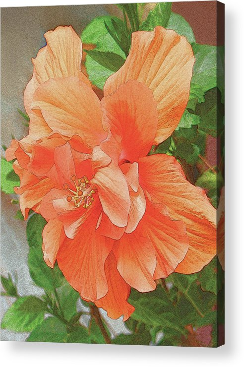 Flower Acrylic Print featuring the painting Hibiscus Flower by John Dyess