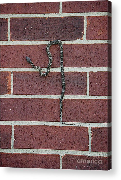 Nature Acrylic Print featuring the photograph Indecision by Lucyna A M Green