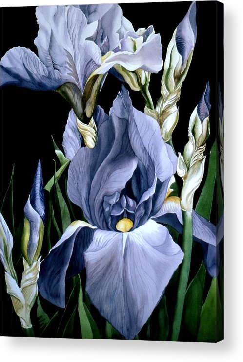 Garden Acrylic Print featuring the painting Irises In Blue by Alfred Ng