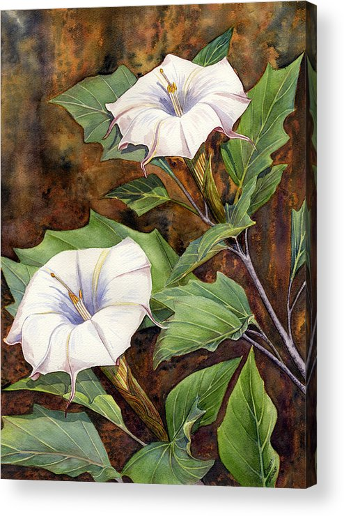 Sacred Datura Acrylic Print featuring the painting Moon Lilies by Catherine G McElroy