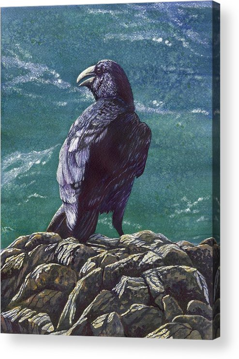 Bird Acrylic Print featuring the painting Raven by Catherine G McElroy