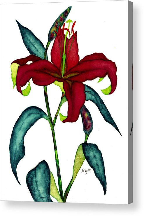 Watercolor Acrylic Print featuring the painting Red Lily by Stephanie Jolley