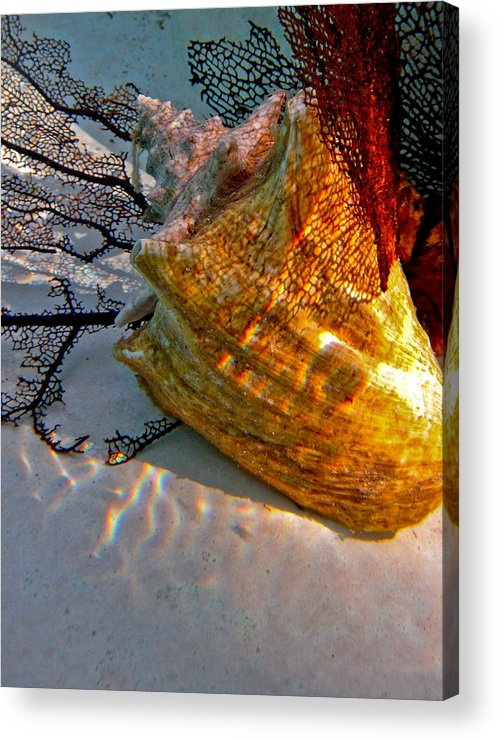 Conch Shell Coral Shadows Gold Red Black Blue Underwater Bright Acrylic Print featuring the photograph Shadow On The Shell by Barbara Kelley