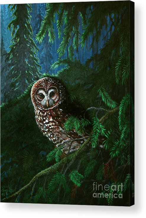 Owl Acrylic Print featuring the painting Spotted Owl In Ancient Forest by Nick Gustafson