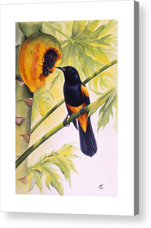 Chris Cox Acrylic Print featuring the painting St. Lucia Oriole And Papaya by Christopher Cox