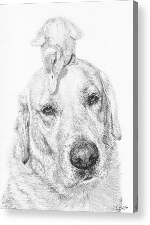 Dog Acrylic Print featuring the drawing Vantage Point by Frances Vincent