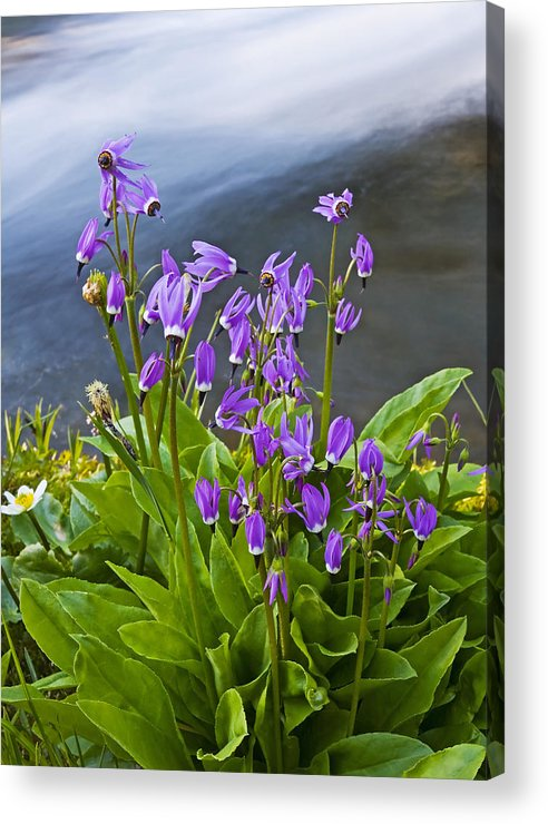 Wildlflowers Acrylic Print featuring the photograph Wildflower Cascade by Mike Dawson