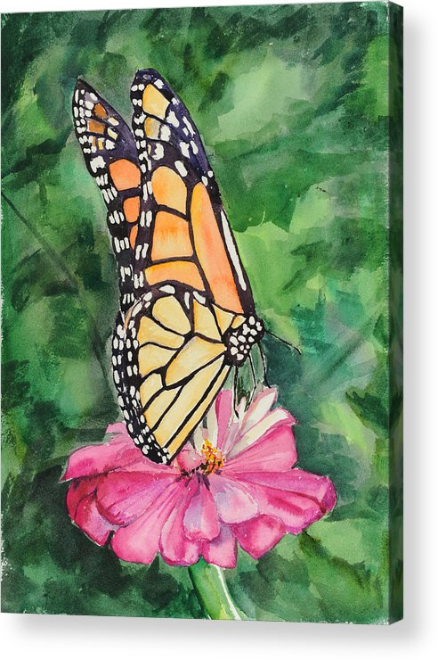 Watercolor. Butterfly Acrylic Print featuring the painting Zinnia And Monarch by Judy Loper