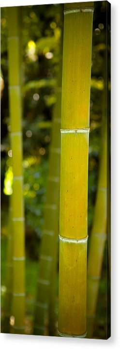Bamboo Acrylic Print featuring the photograph Mystical Bamboo by Sebastian Musial