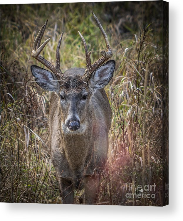Deer Acrylic Print featuring the photograph The One You Look For by Ronald Grogan