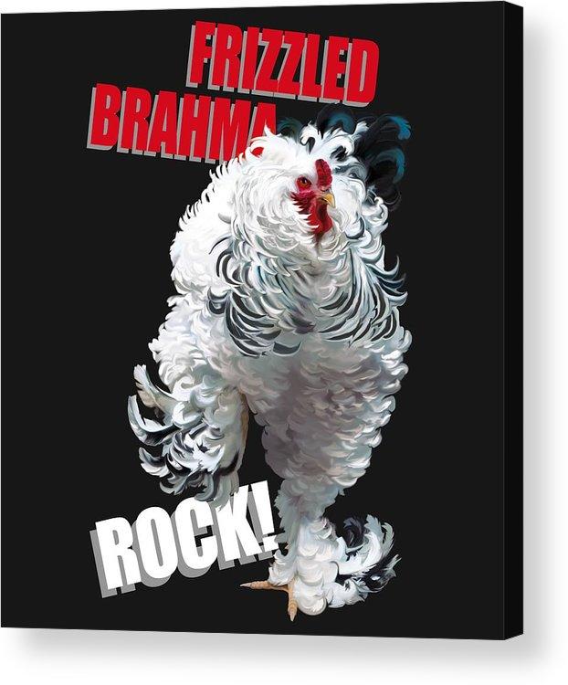 Frizzled Brahma Light Brahma Acrylic Print featuring the digital art Frizzled Brahma T-shirt Print by Sigrid Van Dort