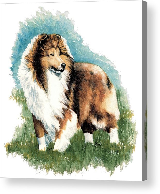 Shetland Sheepdog Acrylic Print featuring the painting Sheltie Watch by Kathleen Sepulveda
