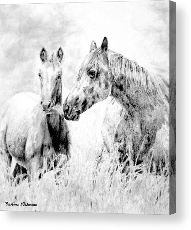 Horses Acrylic Print featuring the drawing Grazing by Barbara Widmann