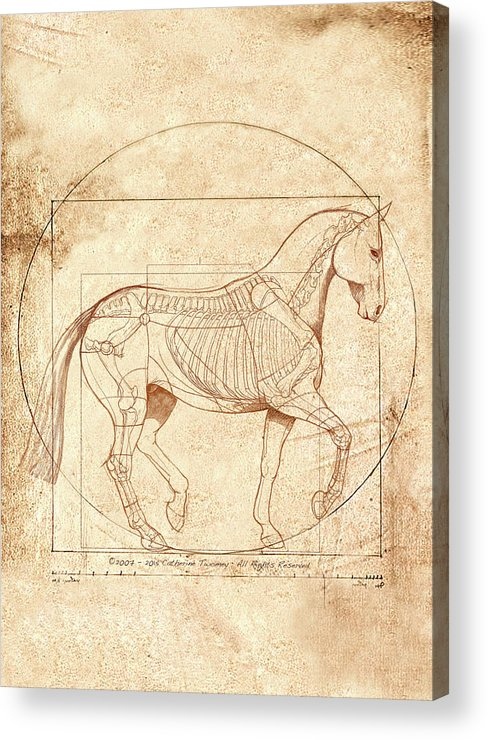 Equine Acrylic Print featuring the painting da Vinci Horse in Piaffe by Catherine Twomey