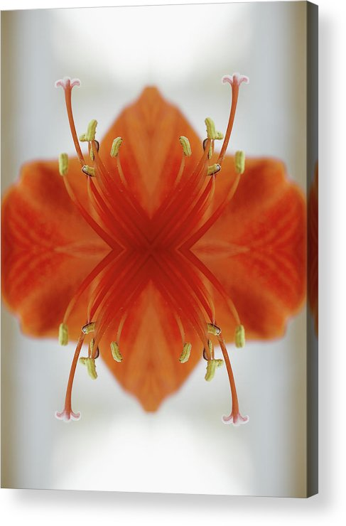 Tranquility Acrylic Print featuring the photograph Red Amaryllis Flower by Silvia Otte