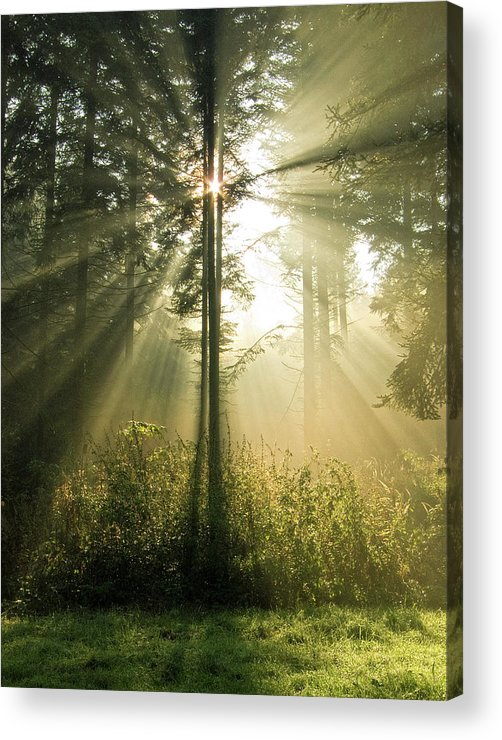 Nature Acrylic Print featuring the photograph Splendour by Daniel Csoka