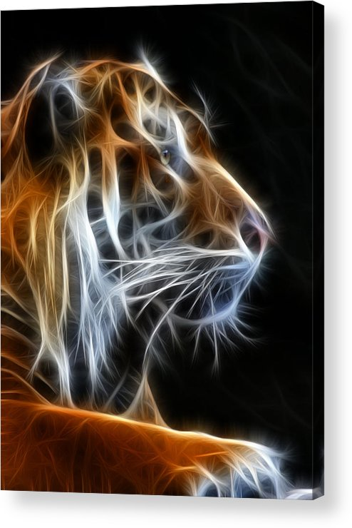 Tiger Acrylic Print featuring the photograph Tiger Fractal 2 by Shane Bechler