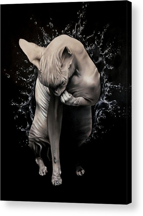 Original Acrylic Print featuring the painting Wet Sphynx by Stephanie LeVasseur