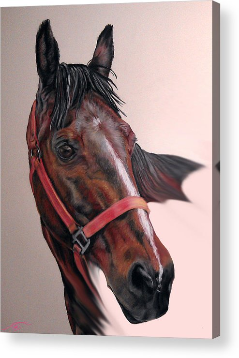 Quarter Horse Acrylic Print featuring the pastel Lynette's Quarter Horse by Ann Marie Chaffin