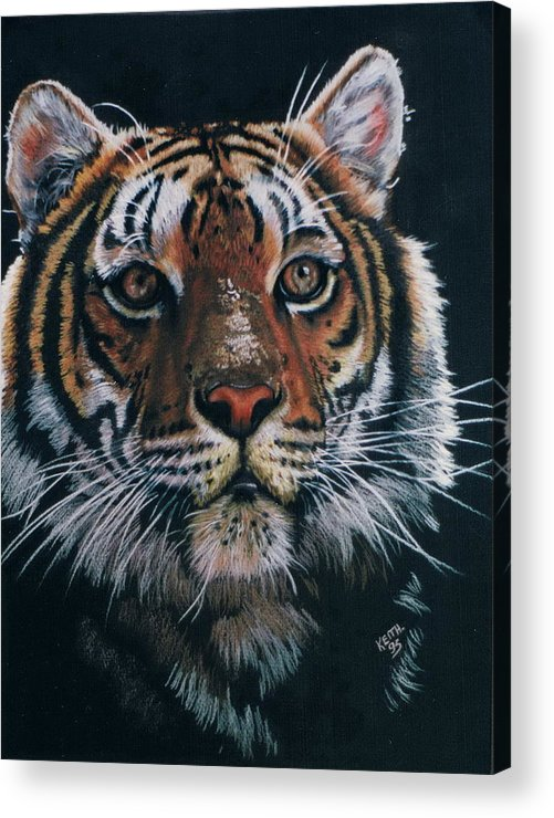 Tiger Acrylic Print featuring the drawing Backlit Tiger by Barbara Keith